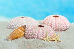 Urchins and starfish on beach Stock Images
