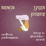 Urdhva Padmasana 在shoulderstand的莲花 图库摄影