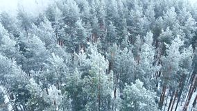 Uren en landschap Sneeuw bos, luchtschot Adembenemend natuurlijk landschap, bevroren bos en donkere gebiedsweg met sneeuw stock video