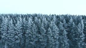 Uren en landschap Sneeuw bos, luchtschot Adembenemend natuurlijk landschap, bevroren bos en donkere gebiedsweg met sneeuw stock footage