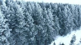 Uren en landschap Sneeuw bos, luchtschot Adembenemend natuurlijk landschap, bevroren bos en donkere gebiedsweg met sneeuw stock videobeelden