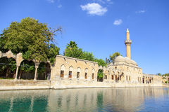 Urfa Fish Lake Royalty Free Stock Photo
