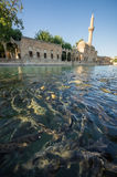 Urfa, Turkey Royalty Free Stock Image