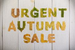 Urgent autumn sale. The text `urgent autumn sale` cut from different yellow and orange fallen leaves from the trees and laid on the white wooden boards Royalty Free Stock Image
