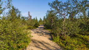 Urho Kekkonen National Park in Finland. Royalty Free Stock Photos