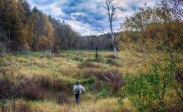 urinar nos arbustos pantanosos durante uma caminhada Imagem de Stock Royalty Free