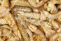 Urine shrimp Stock Images