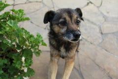 Urinol, o cão fotografia de stock royalty free
