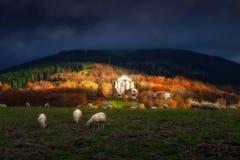 Urkiola με τα πρόβατα στη βασκική χώρα Στοκ Εικόνες