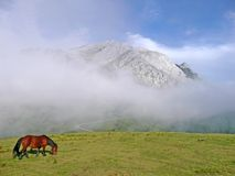 Urkiola mountain with a horse Royalty Free Stock Image
