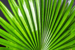urlop zielona palma Zdjęcia Royalty Free