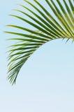 urlop zielona palma Obrazy Royalty Free