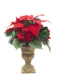 Urn with Christmas flower arrangement on white Royalty Free Stock Photo