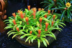 Urn plants Stock Photo