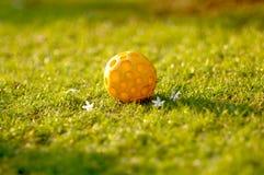 Urocza żółta piłka w ogródzie Fotografia Royalty Free