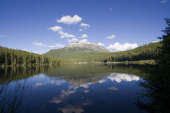 urocza alces panorama lake Zdjęcie Royalty Free