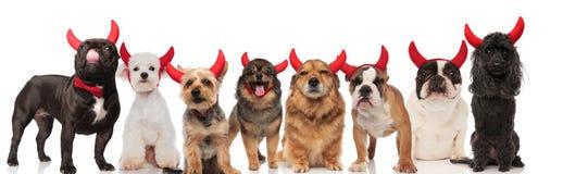 Urocza drużyna osiem psów ubierał jako diabeł zdjęcie stock