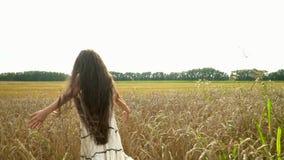Urocza dziewczyna chodzi na Rosyjskim polu Zakończenie up wręcza bawić się w trawiastym polu przy półmrokiem dziewczyny złota god zbiory