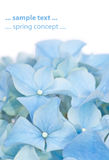 urocza flory wiosna Zdjęcia Stock