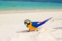 Urocza jaskrawa kolorowa papuga na białym piasku Fotografia Royalty Free