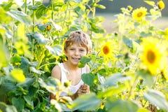 Urocza mała blondynu dzieciaka chłopiec na lato słonecznika polu outdoors Śliczny preschool dziecko ma zabawę na ciepłym lato wie obrazy royalty free