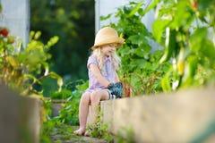 Urocza mała dziewczynka jest ubranym słomianego kapelusz bawić się z jej zabawkarskimi ogrodowymi narzędziami w szklarni Zdjęcia Stock