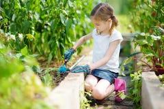 Urocza mała dziewczynka jest ubranym słomianego kapelusz bawić się z jej zabawkarskimi ogrodowymi narzędziami w szklarni Obrazy Royalty Free