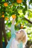Urocza mała dziewczynka podnosi świeże dojrzałe pomarańcze obraz royalty free