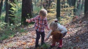 Urocza mała dziewczynka wycieczkuje w lesie na letnim dniu Szczęśliwa dziecko dziewczyna w lasowym małym dziecku bawić się w jesi zbiory