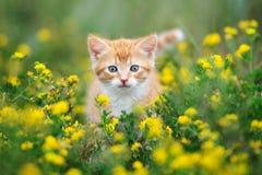 Urocza mała figlarka pozuje outdoors w lecie Zdjęcia Stock