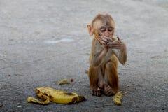urocza małpa Fotografia Stock