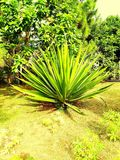 Urocza roślina Zdjęcie Royalty Free