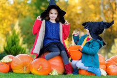 Urocze małe dziewczynki jest ubranym Halloween kostium ma zabawę na dyniowej łacie Obrazy Stock