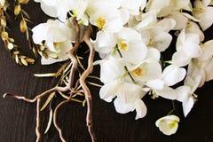 Urocze orchidee Obraz Royalty Free