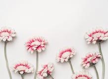 Urocze stokrotki kwitną na białym desktop tle, kwiecista granica, odgórny widok Kreatywnie układ dla wakacje powitania fotografia stock