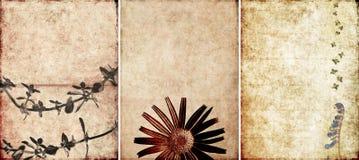 urocze tło tekstury trzy Zdjęcia Stock