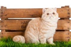 Uroczego kota drewniany pudełko na białego tła zielonej trawie zdjęcie royalty free