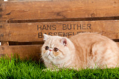 Uroczego kota drewniany pudełko odizolowywający na białego tła zielonej trawie obrazy royalty free