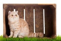 Uroczego kota drewniany pudełko odizolowywający na białym tło zwierze domowy zdjęcia stock