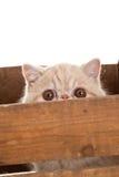 Uroczego kota drewniany pudełko odizolowywający na białym tle obrazy royalty free