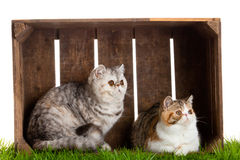 Uroczego kota drewniany pudełko odizolowywający na białym tle zdjęcia royalty free