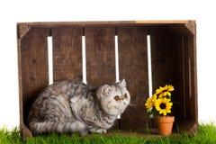 Uroczego kota drewniany pudełko odizolowywający na białym tle obraz stock