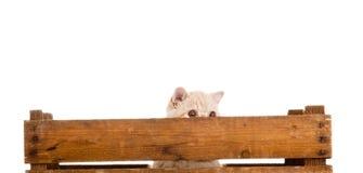 Uroczego kota drewniany pudełko odizolowywający na białym tle obraz royalty free