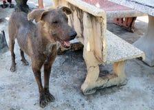 Uroczego politowanie psa skóry bólu futerkowa problemowa pozycja obraz royalty free
