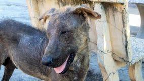 Uroczego politowanie psa skóry bólu futerkowa problemowa pozycja fotografia royalty free