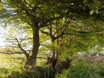 Uroczej dorośnięcie zieleni luksusowy drzewo na zewnątrz pięknych i pokojowych wi Obraz Stock