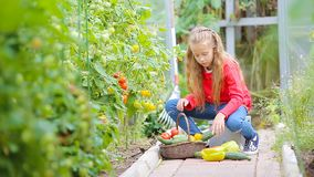 Uroczej małej dziewczynki zbieracka uprawa ogórki, pepers i pomidory w szklarni, Portret dzieciak z czerwonym pomidorem wewnątrz zdjęcie wideo