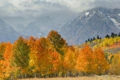 uroczyści jesień tetons Zdjęcia Stock