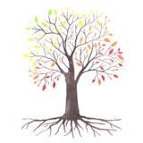 Uroczy autunm drzewo Obrazy Royalty Free