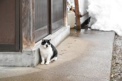 Uroczy bezdomny Japoński gruby czarny i biały kota biel z żółtym okiem siedzi obok drewnianego drzwi i tła śniegu za fotografia royalty free